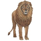 Lion Peel and Stick Wall Sticker