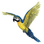 Macaw Peel and Stick Wall Sticker
