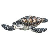 Sea Turtle Peel and Stick Wall Sticker